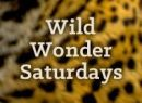 Wild Wonder Saturdays: Chemistry Of and In Outer Space Event Image