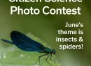Citizen Science: Insects Event Image